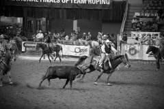 Action photos of Blake roping his steer at the National Finals of Team Roping Championships. 8/11